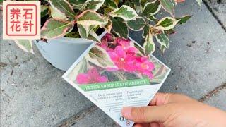专业花店的几种特色花园木本植物 - 小经验分享,也看看价格