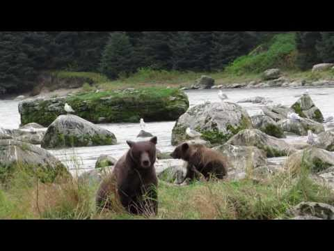 Alaska's Grizzlies Up Close and Personal
