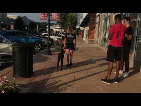 11 month old Doberman, Diva    Lehigh Valley Dog Trainers: Best Doberman Obedience Trainers