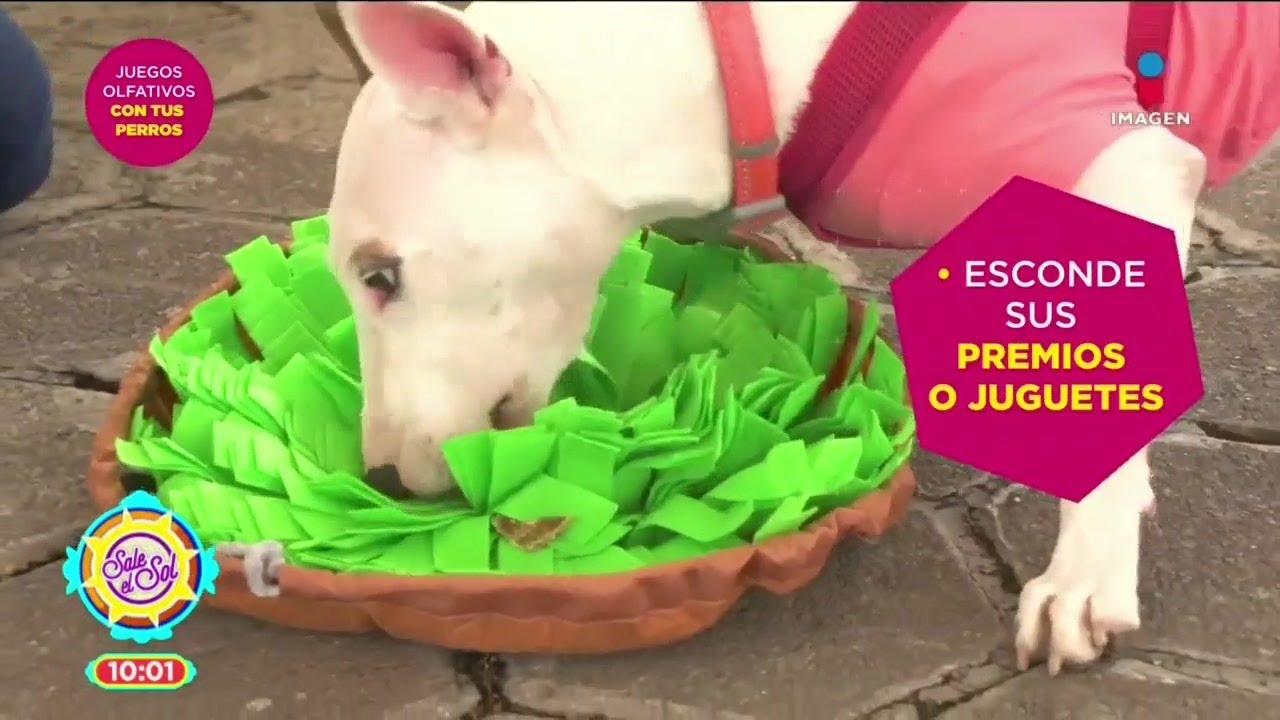 Juegos para que tu perro desarrolle su olfato | Sale el Sol