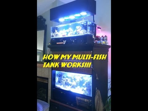 How My Multi-Fish Tank System Works!!!