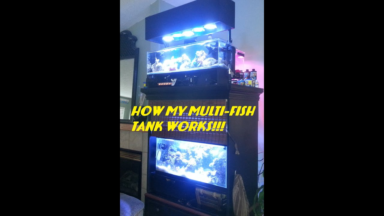 how my multi fish tank system works youtube