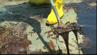 Pelicans, Dolphins Dying in the Gulf, Silent Victims, Gulf Oil Spill 2010
