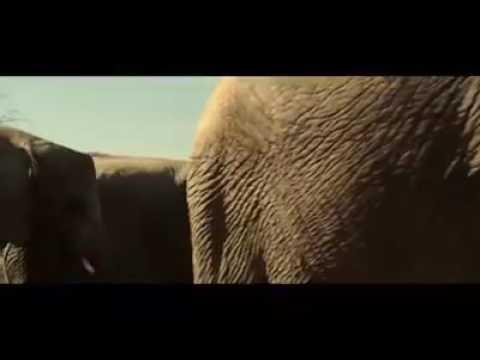 Elephant blow job