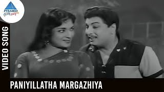 Anandha Jodhi Movie Songs | Paniyillatha Margazhiya Video Song | MGR | Devika | Pyramid Glitz Music