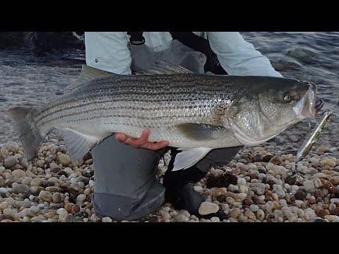 Large Surf Fishing Striper And Surfcasting Gear Review
