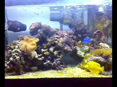 Acquario marino tropicale ed solo l 39 inizio youtube for Acquario marino 100 litri prezzo