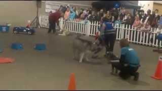 Abt At Pet Expo 2013