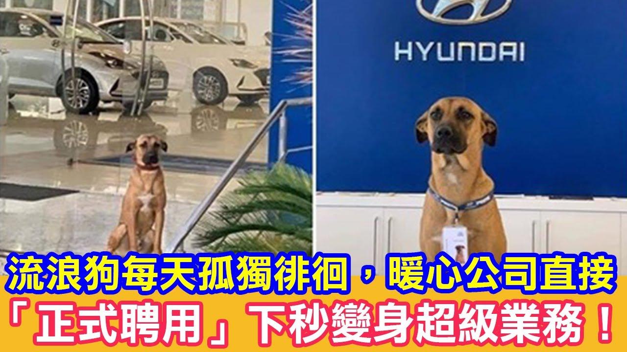 流浪狗每天孤獨徘徊,暖心公司直接「正式聘用」下秒變身超級業務!|狗狗故事