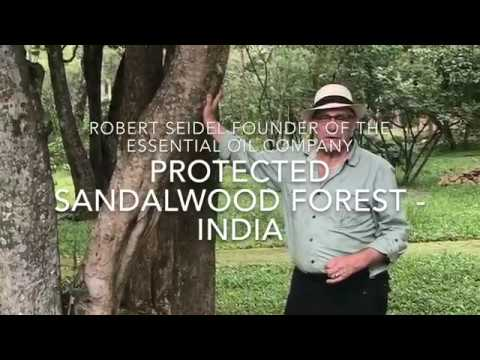 Protected Sandalwood Forest Southern India