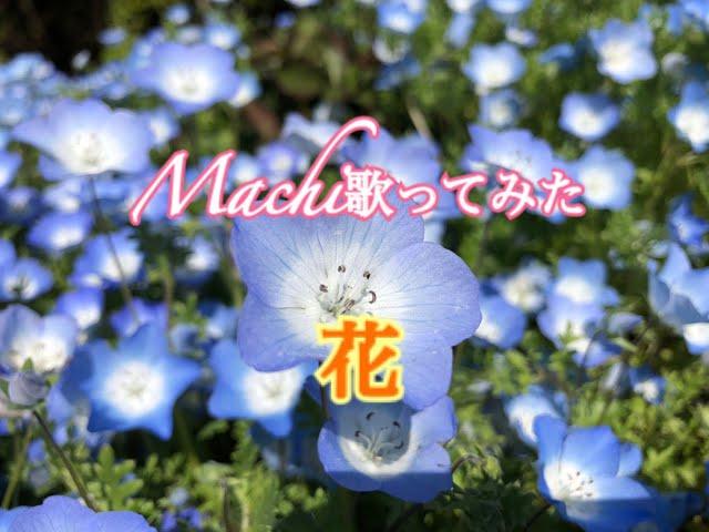 #55 花/Cover by Machi/歌ってみた/中孝介