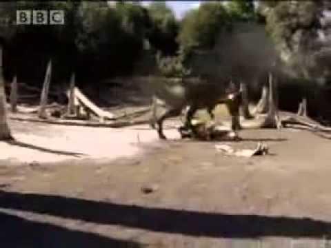 Anatotitan - roar