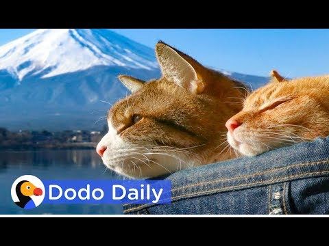 Rescued Cats Explore Mt. Fuji With New Parents   Best Animal Videos   The Dodo Daily