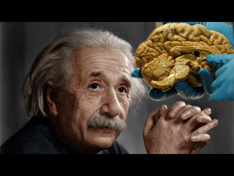 Ternyata Isi Otak Albert Einstein Begini