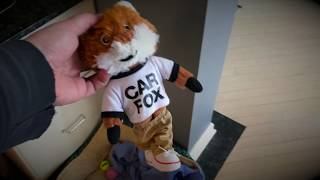 """Otto meets the Car Fox - Featuring Otto, Official Yorkshire Terrier of """"Chris Drives Cars"""""""