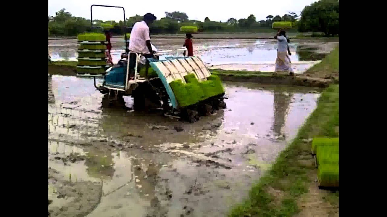 Paddy Cultivation Guide: Different Methods of Rice Cultivation in India