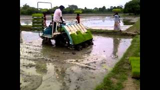 SRI Method of Paddy Cultivation