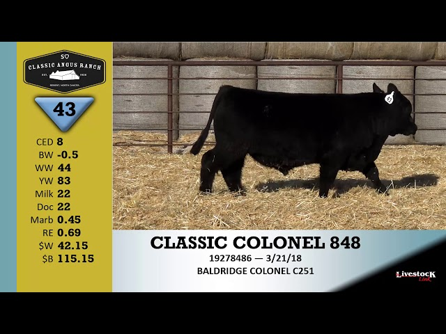 Classic Angus Ranch Lot 43
