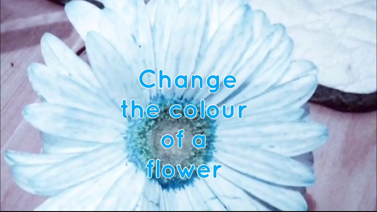 JUMBLE FUN. Change the colour of flowers. Diffusion. - YouTube