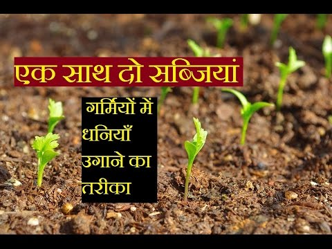Vegetable gardening || How to Grow two vegetable in a pot