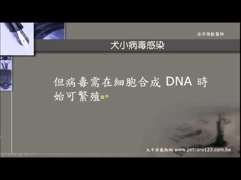 犬小病毒感染的病因及症狀 - YouTube