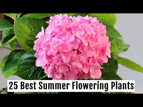 grow-these-25-best-summer-flowering-plants-this-season---part-1