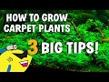 3 AQUARIUM CARPET PLANT TIPS! How To Grow Carpeting Plants BETTER