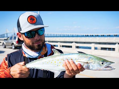 Simple Rig To Catch Spanish Mackerel Off ANY Fishing Pier