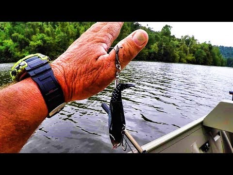 How To Remove A Fish Hook Quick And Easy!