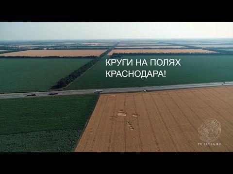 Круги на полях 4К. Россия, Кубань, село Соколовское, 2018