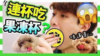 【實驗吃法】🤤可以「連杯吃」的果凍?能成功嗎?會爛嗎?(中字)
