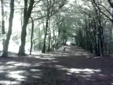 Leprechaun At Mullaghreelan Wood Youtube