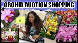 All About ORCHID AUCTIONS!