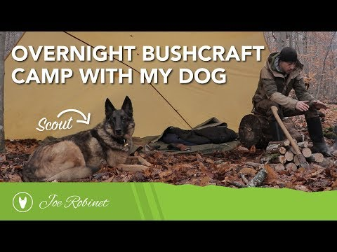 Overnight Bushcraft Camp with my Dog - WAKING UP IN THE SNOW!