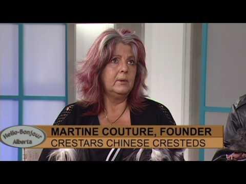 Crestars Chinese Cresteds Part 1