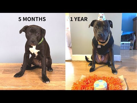MY PUPPY GROWING UP! (20 WEEKS - 1 YEAR) FROM PUPPY TO DOG!