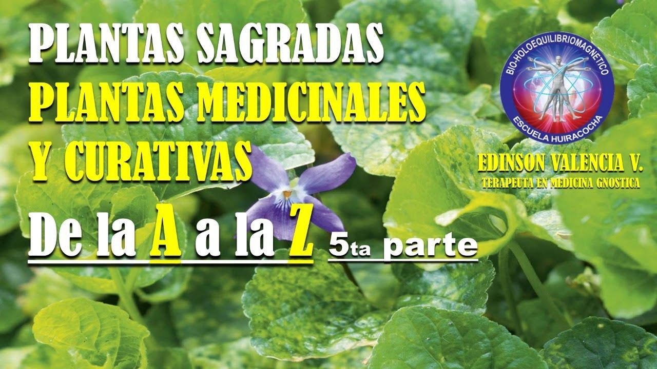 5ta parte PLANTAS SAGRADAS De la A a la Z PLANTAS MEDICINALES  Y CURATIVAS