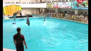 Дельфинарий - по ту строну праздника