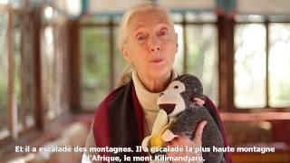 Question / réponse à Jane Goodall : Pourquoi êtes-vous toujours avec ce singe dans les bras ?