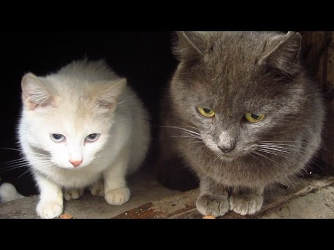 Cats with a white kitten after the rain