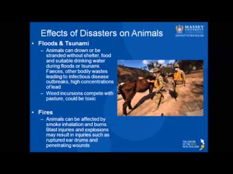 Veterinary Emergency Response Teams: Hayley Squance