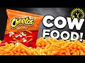 Food Theory: Cheetos Are Cow Food! MP3