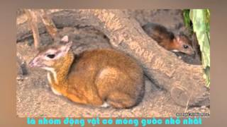 Danh sách những loài động vật trong sách Đỏ Việt Nam