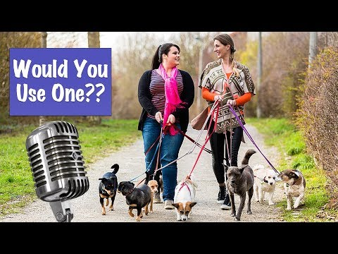 dog-walking-app---the-real-cost-of-convenience---dog-training-podcast