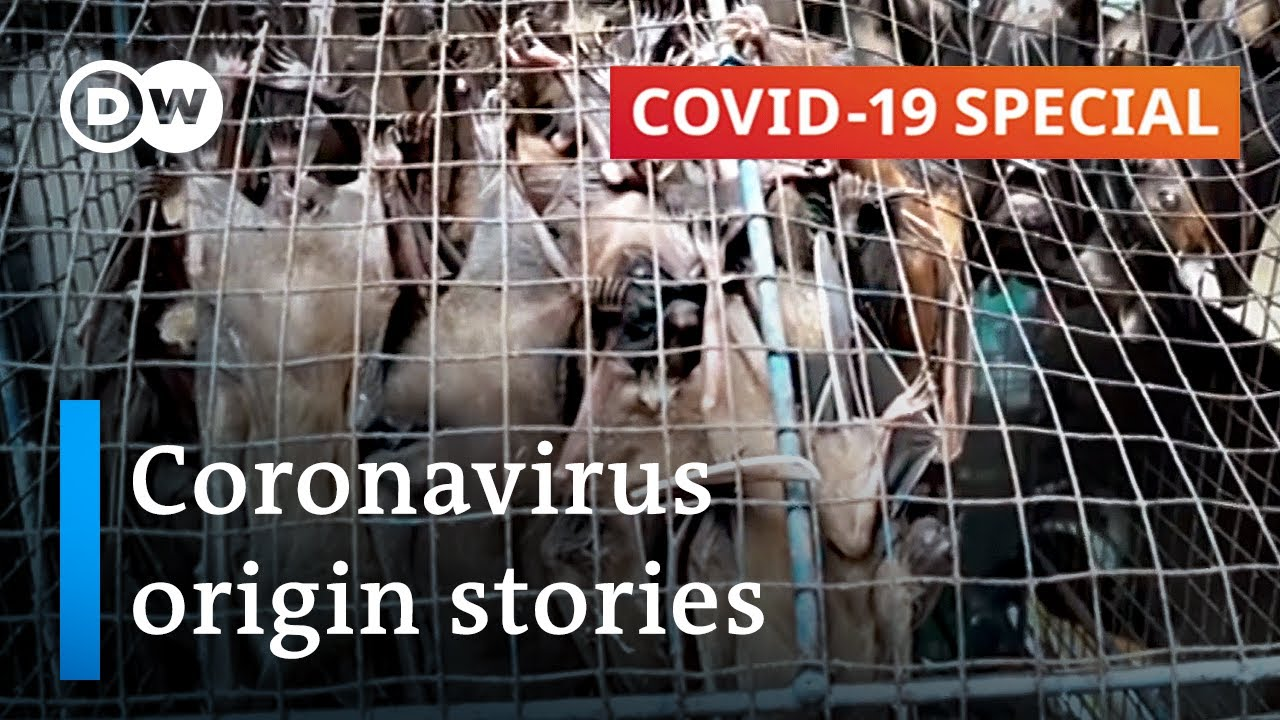 Where did the coronavirus come from  COVID19 Special