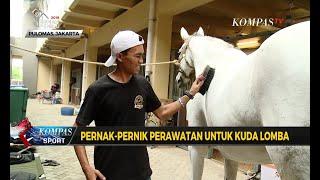 Pernak pernik Perawatan untuk Kuda Lomba Harganya Hingga Miliaran