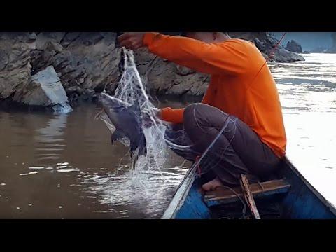 Mekong fishing กางข่ายหาปลาเพลี้ยแม่น้ำโขง