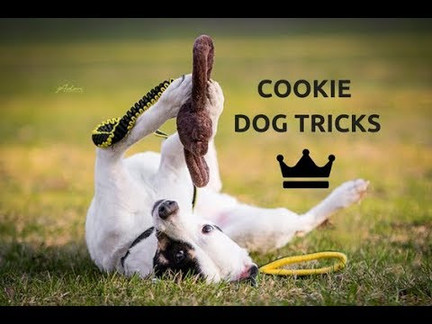 Cookie | Dog Tricks