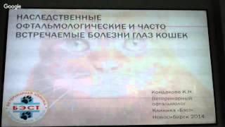 Офтальмология кошек