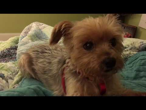 Passion 4 Paws: Fig Newton Breathing